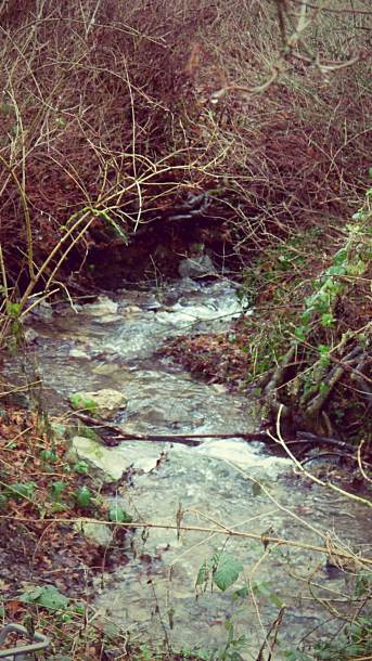 Radhadesh is peaceful - all you hear is this gurgling stream.
