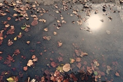 Fall leaves and puddles