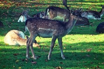 Airborne Museum Hartenstein - deer park
