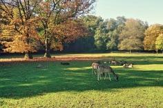 Deers in the park