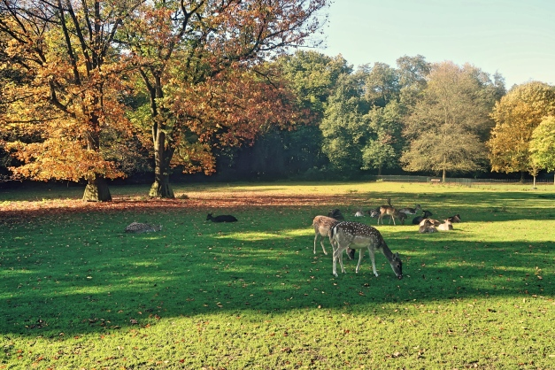Deers in the park