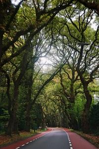 Oosterbeek trail