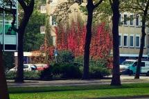 Autumn in Amsterdam 2017