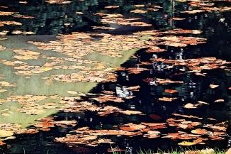 Reflective water, nature's artwork