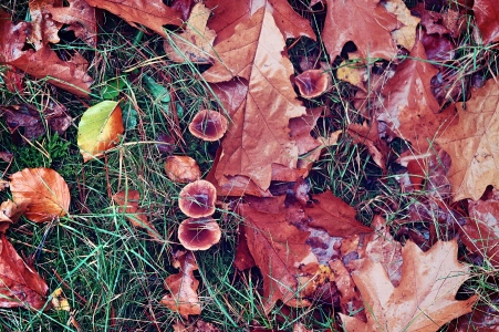 Shrooms in the forest