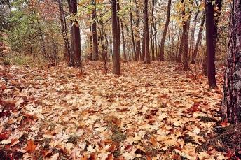 Fall scape