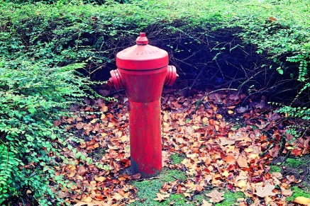 Fire hydrant in Autumn