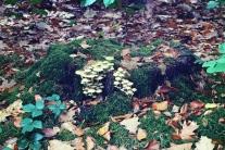 Creepy mushroom cluster