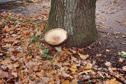 Massive mushroom